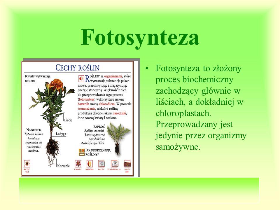 Fotosynteza Fotosynteza to złożony proces biochemiczny zachodzący głównie w liściach, a dokładniej w chloroplastach. Przeprowadzany jest jedynie przez