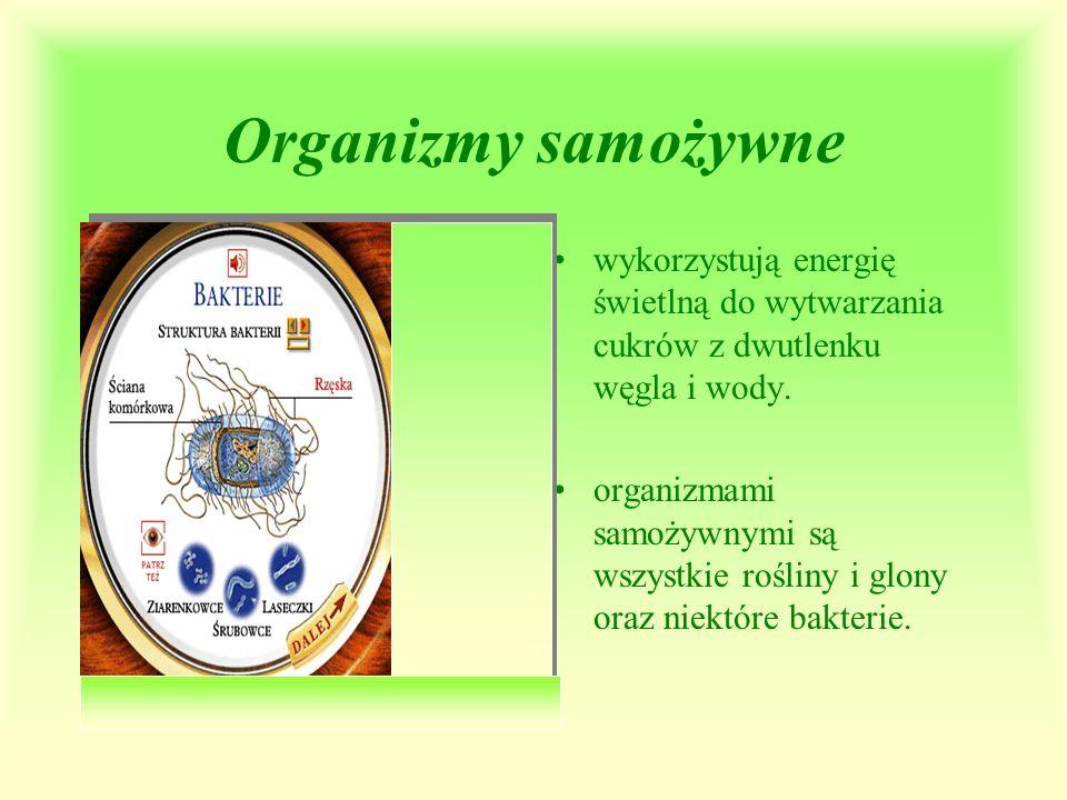 Organizmy samożywne wykorzystują energię świetlną do wytwarzania cukrów z dwutlenku węgla i wody. organizmami samożywnymi są wszystkie rośliny i glony