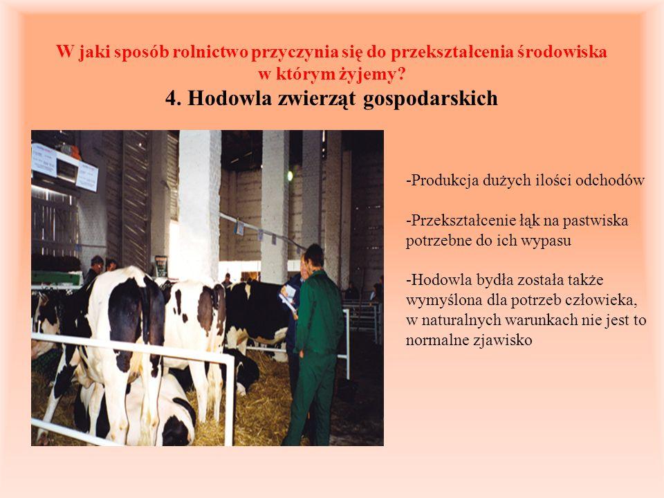 W jaki sposób rolnictwo przyczynia się do przekształcenia środowiska w którym żyjemy? 4. Hodowla zwierząt gospodarskich -Produkcja dużych ilości odcho