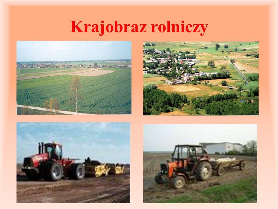 Krajobraz rolniczy