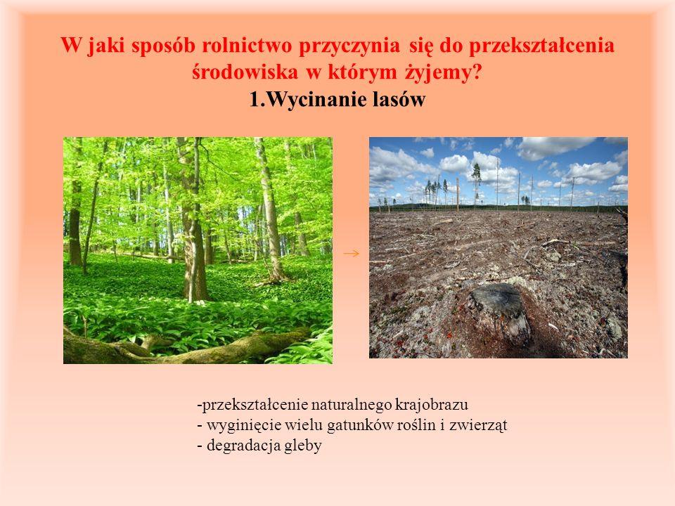 W jaki sposób rolnictwo przyczynia się do przekształcenia środowiska w którym żyjemy? 1.Wycinanie lasów -przekształcenie naturalnego krajobrazu - wygi