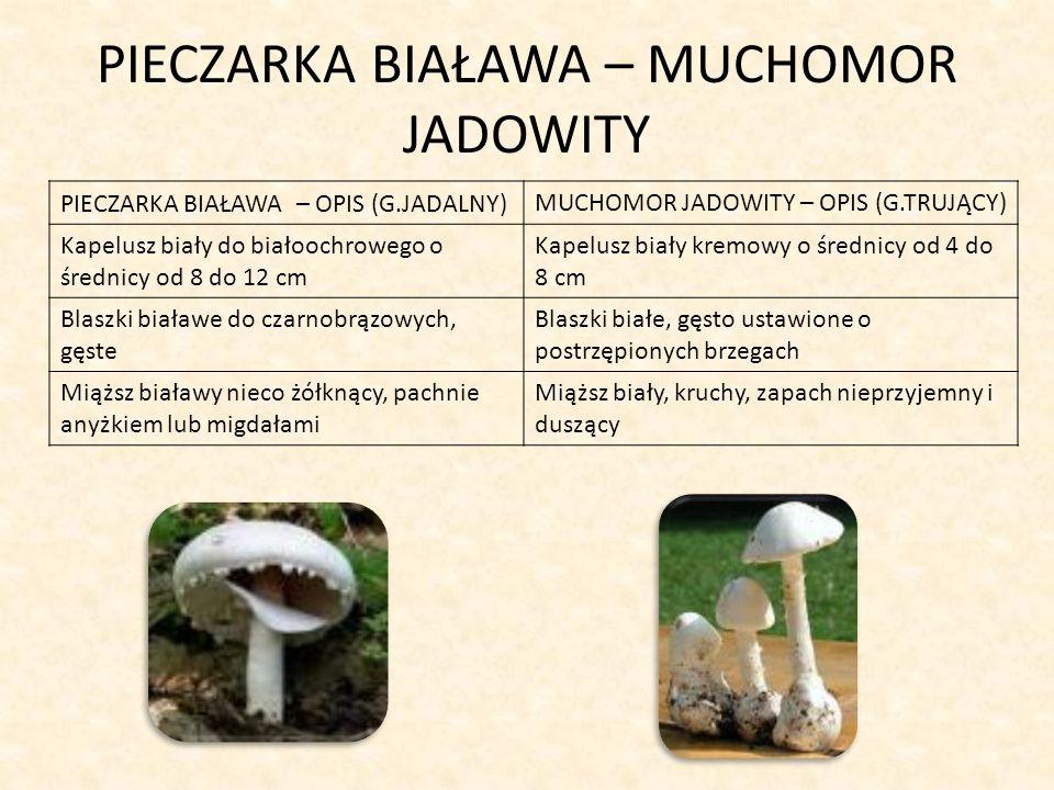 OPIEŃKA MIODOWA – MAŚLANKA WIĄZKOWA OPIEŃKA MIODOWA - OPIS (G.JADALNY)MAŚLANKA WIĄZKOWA - OPIS (G.TRUJĄCY) Kapelusz miodowożółty do oliwkowobrązowego