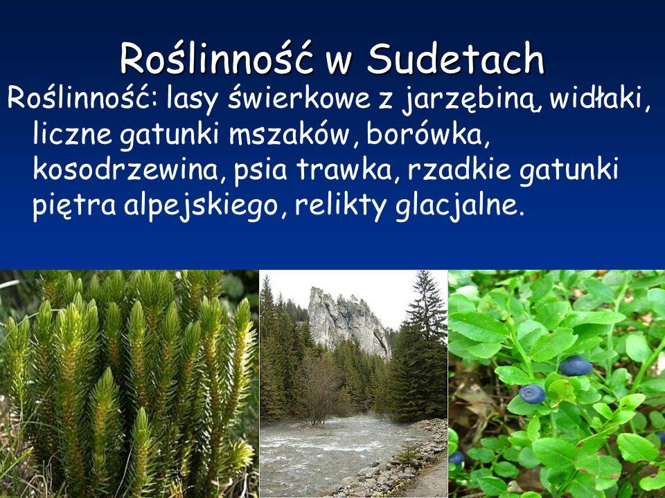 Roślinność w Sudetach Roślinność: lasy świerkowe z jarzębiną, widłaki, liczne gatunki mszaków, borówka, kosodrzewina, psia trawka, rzadkie gatunki pię