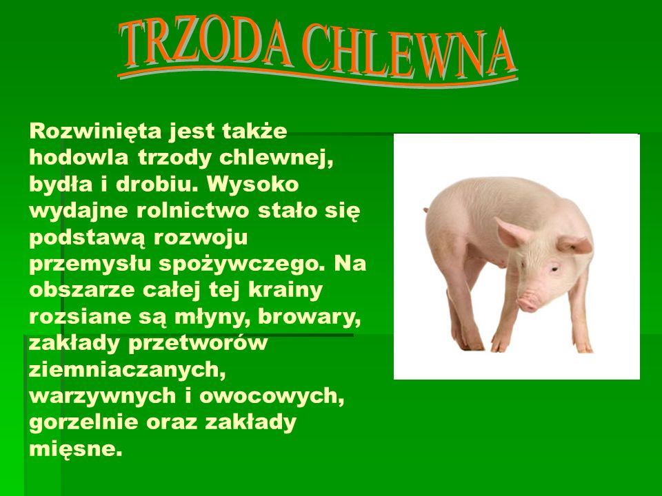 Na Nizinie Wielkopolskiej występują złoża węgla brunatnego oraz soli kamiennej (Kłodawa).Węgiel brunatny wydobywany jest na północy tego regionu, w okolicach miasta Turek, oraz na południu, w sąsiedztwie Bełchatowa.