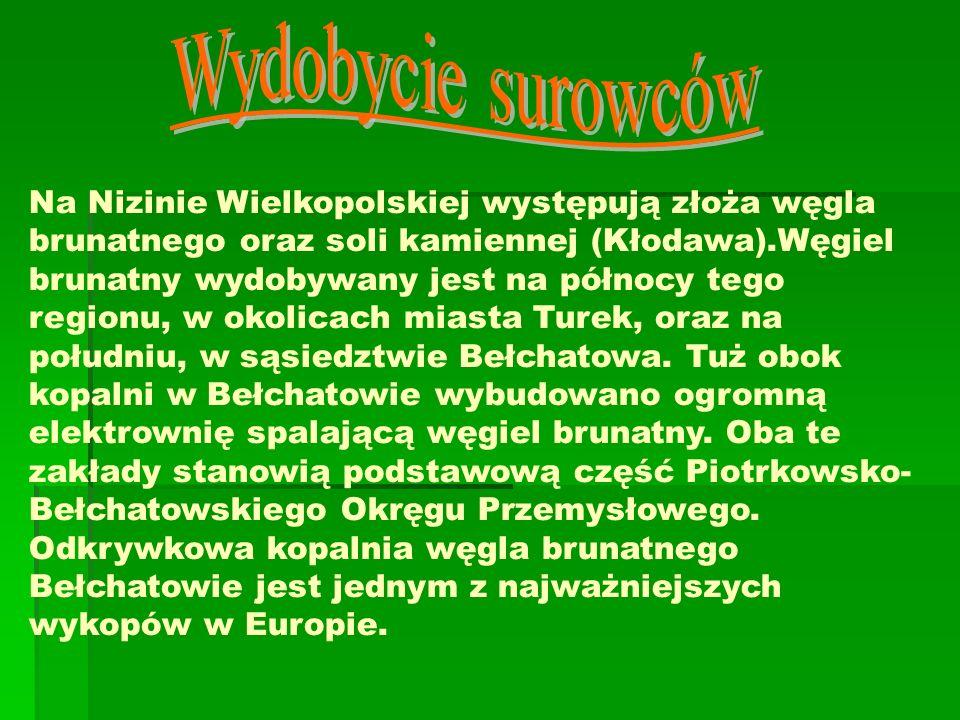 Na Nizinie Wielkopolskiej występują złoża węgla brunatnego oraz soli kamiennej (Kłodawa).Węgiel brunatny wydobywany jest na północy tego regionu, w ok
