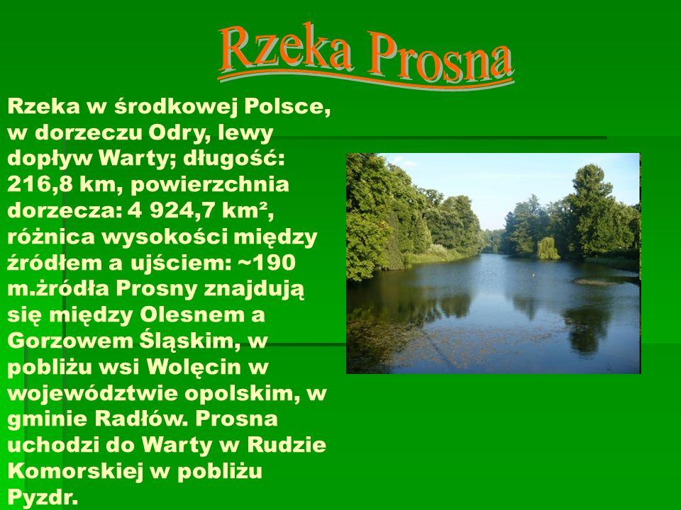 Rzeka w środkowej Polsce, w dorzeczu Odry, lewy dopływ Warty; długość: 216,8 km, powierzchnia dorzecza: 4 924,7 km², różnica wysokości między źródłem
