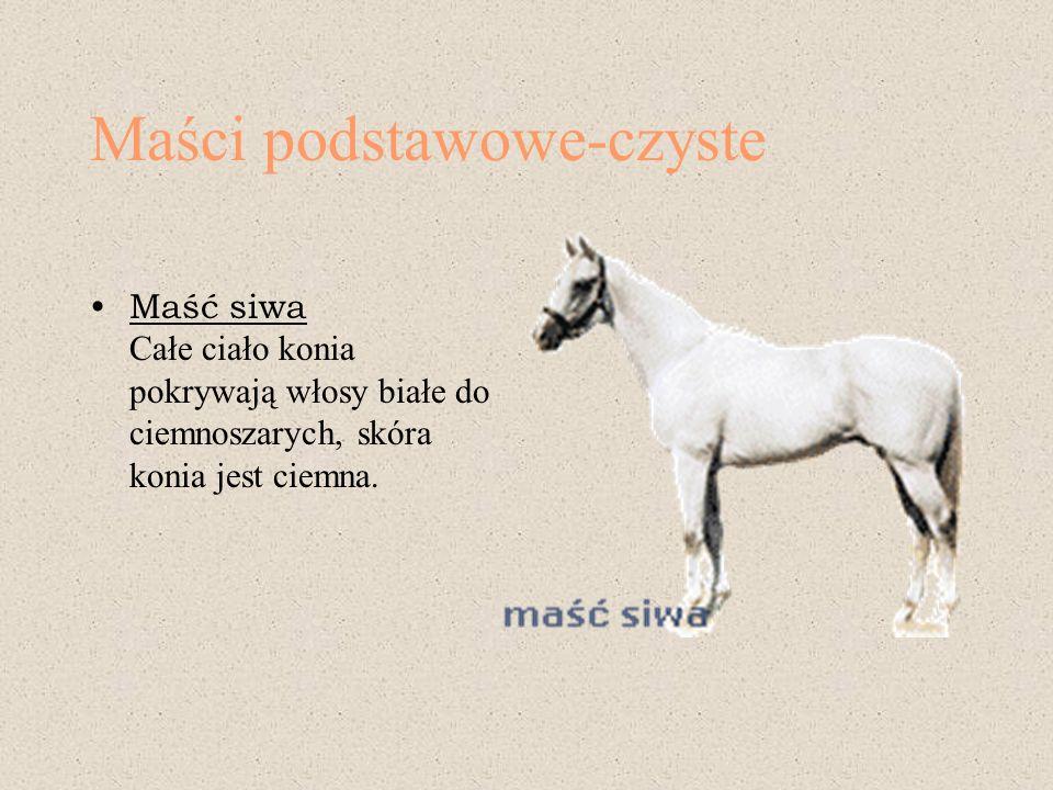 Maści podstawowe-czyste Maść siwa Całe ciało konia pokrywają włosy białe do ciemnoszarych, skóra konia jest ciemna.