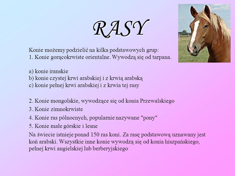 RASY Konie możemy podzielić na kilka podstawowych grup: 1.