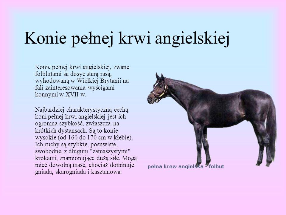 Konie pełnej krwi angielskiej Konie pełnej krwi angielskiej, zwane folblutami są dosyć starą rasą, wyhodowaną w Wielkiej Brytanii na fali zainteresowania wyścigami konnymi w XVII w.