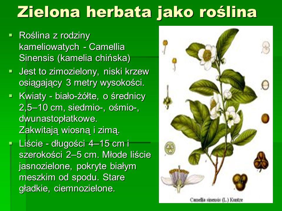 Składniki zielonej herbaty garbniki katechinowe 10-20% niekiedy nawet do 25% garbniki katechinowe 10-20% niekiedy nawet do 25% witaminy (m.in.