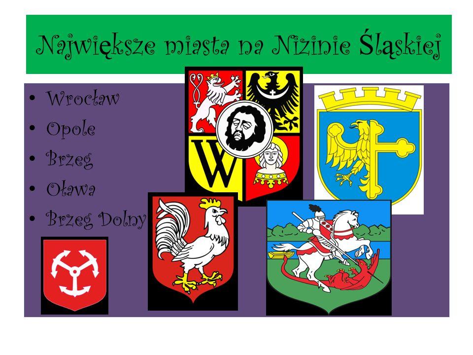 Najwi ę ksze miasta na Nizinie Ś l ą skiej Wrocław Opole Brzeg Oława Brzeg Dolny