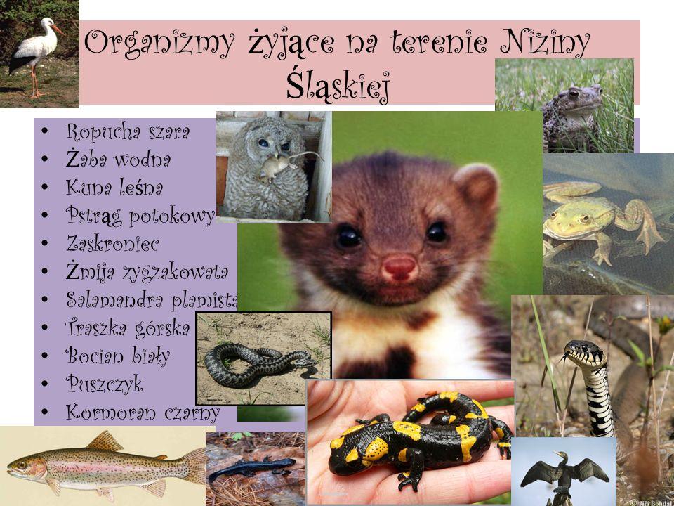 NIZINA Ś L Ą SKA le ż y w Polsce Południowo-Zachodniej.