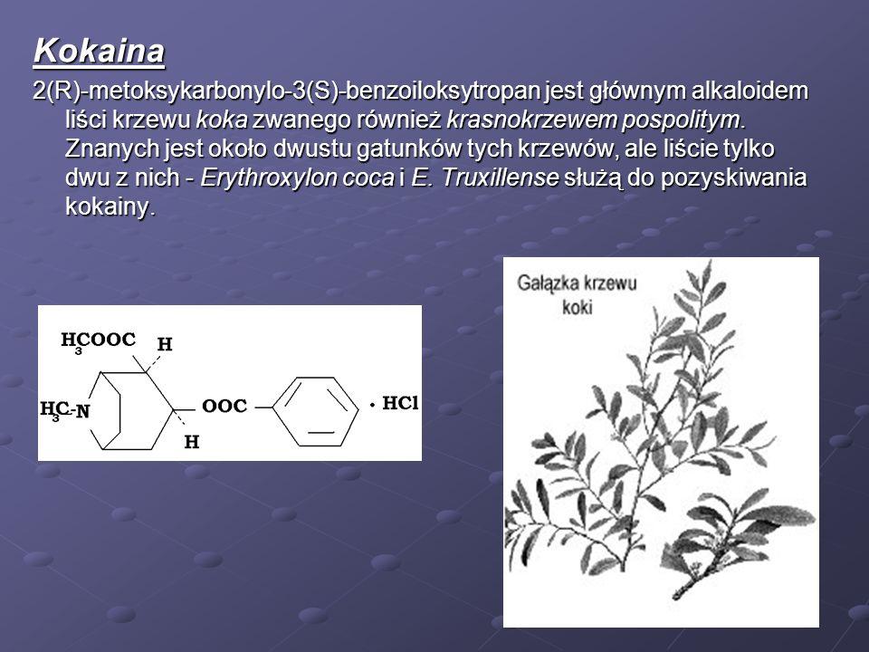 Kokaina 2(R)-metoksykarbonylo-3(S)-benzoiloksytropan jest głównym alkaloidem liści krzewu koka zwanego również krasnokrzewem pospolitym. Znanych jest