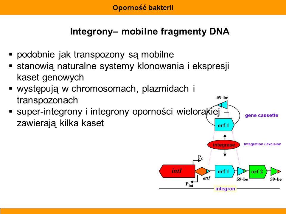 Oporność bakterii Integrony– mobilne fragmenty DNA podobnie jak transpozony są mobilne stanowią naturalne systemy klonowania i ekspresji kaset genowyc