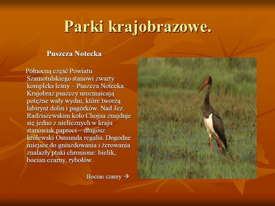 Parki krajobrazowe. Puszcza Notecka Północną część Powiatu Szamotulskiego stanowi zwarty kompleks leśny – Puszcza Notecka. Krajobraz puszczy urozmaica