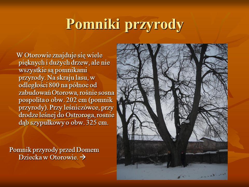 Pomniki przyrody W Otorowie znajduje się wiele pięknych i dużych drzew, ale nie wszystkie są pomnikami przyrody. Na skraju lasu, w odległości 800 na p
