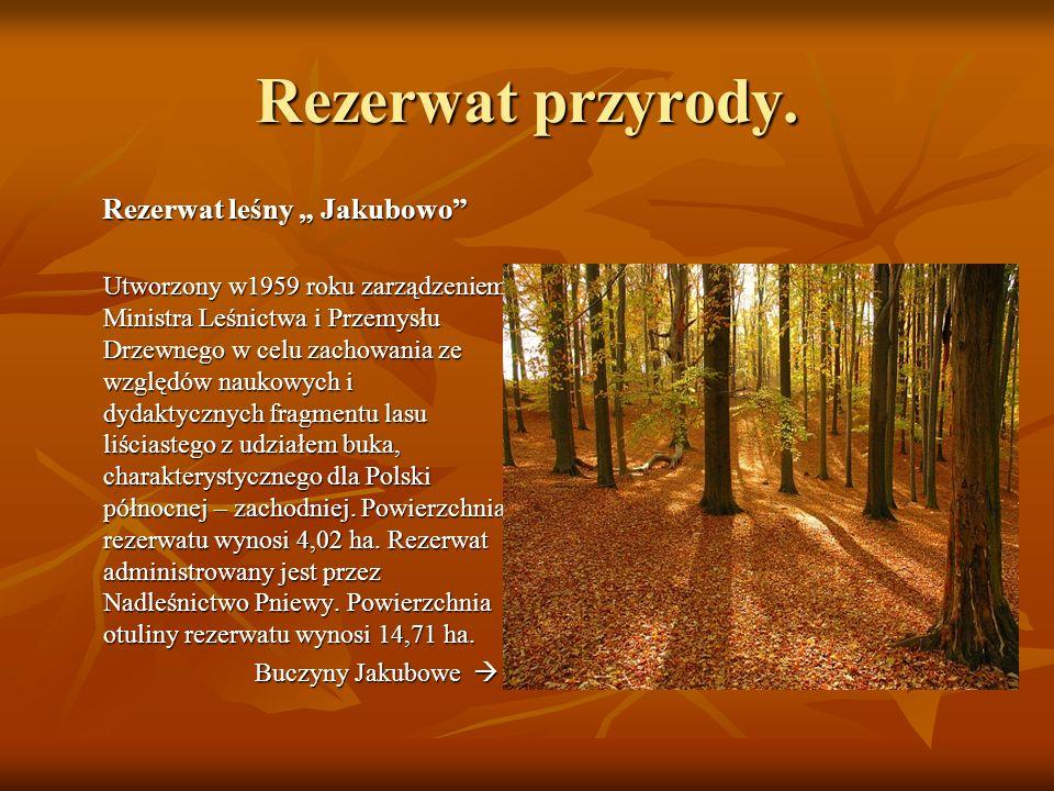 Rezerwat przyrody. Rezerwat leśny Jakubowo Utworzony w1959 roku zarządzeniem Ministra Leśnictwa i Przemysłu Drzewnego w celu zachowania ze względów na