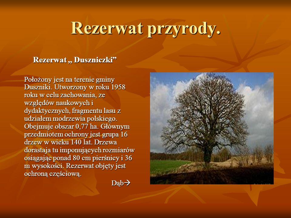 Rezerwat przyrody. Rezerwat,, Duszniczki Położony jest na terenie gminy Duszniki. Utworzony w roku 1958 roku w celu zachowania, ze względów naukowych