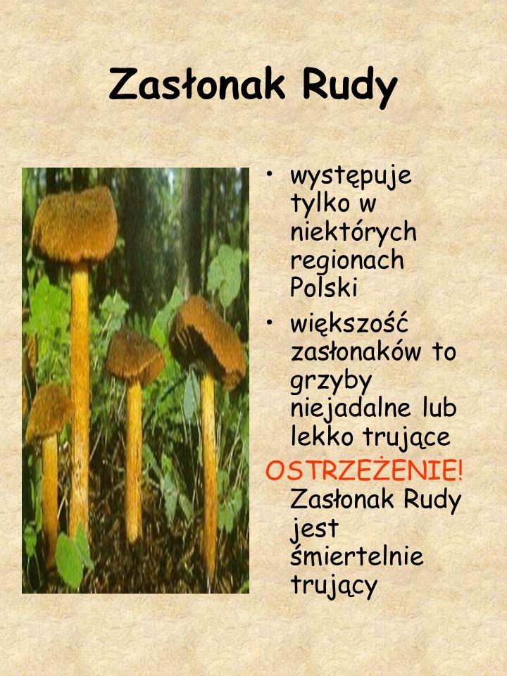 Zasłonak Rudy występuje tylko w niektórych regionach Polski większość zasłonaków to grzyby niejadalne lub lekko trujące OSTRZEŻENIE! Zasłonak Rudy jes