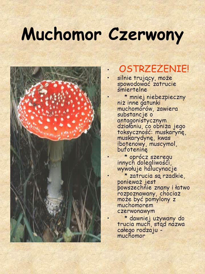 Muchomor Czerwony OSTRZEŻENIE! silnie trujący, może spowodować zatrucie śmiertelne * mniej niebezpieczny niż inne gatunki muchomorów, zawiera substanc