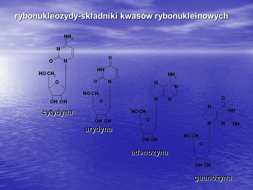 rybonukleozydy-składniki kwasów rybonukleinowych cytydyna urydyna adenozyna guanozyna