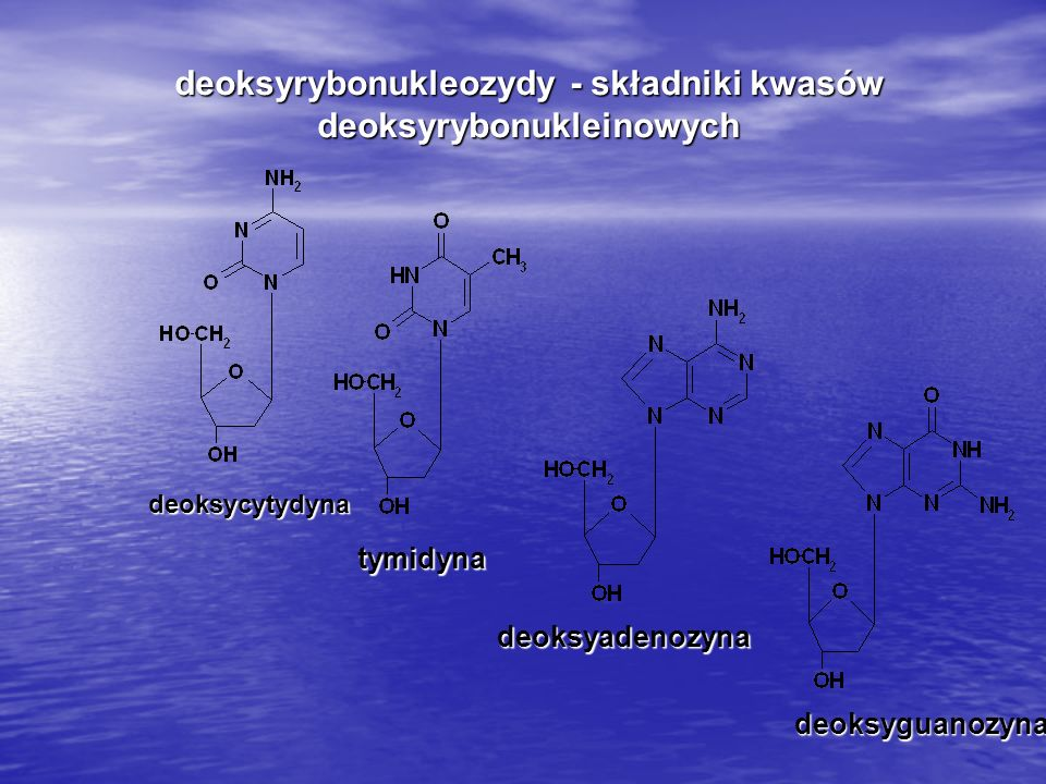 deoksyrybonukleozydy - składniki kwasów deoksyrybonukleinowych deoksycytydyna tymidyna deoksyadenozyna deoksyguanozyna