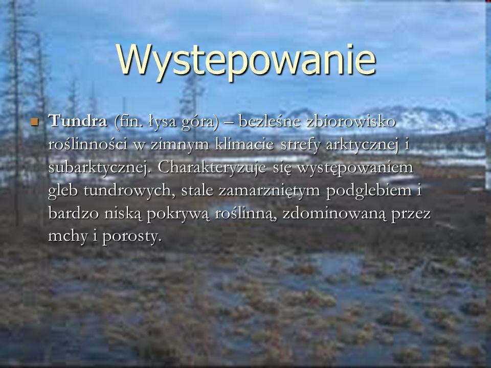 Wystepowanie Tundra (fin. łysa góra) – bezleśne zbiorowisko roślinności w zimnym klimacie strefy arktycznej i subarktycznej. Charakteryzuje się występ