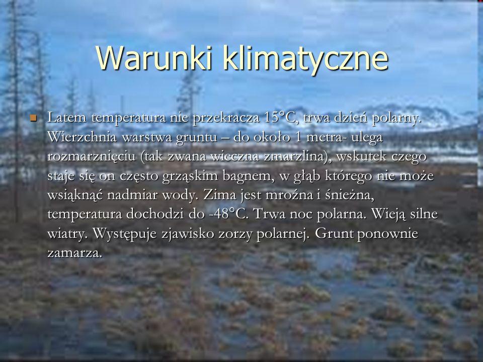 Warunki klimatyczne Latem temperatura nie przekracza 15°C, trwa dzień polarny. Wierzchnia warstwa gruntu – do około 1 metra- ulega rozmarznięciu (tak
