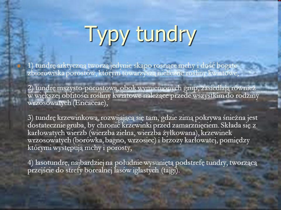 Typy tundry 1) tundrę arktyczną tworzą jedynie skąpo rosnące mchy i dość bogate zbiorowiska porostów, którym towarzyszą nieliczne rośliny kwiatowe, 2)