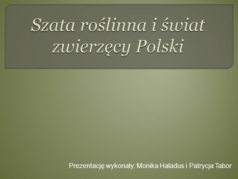 Prezentację wykonały: Monika Haładus i Patrycja Tabor