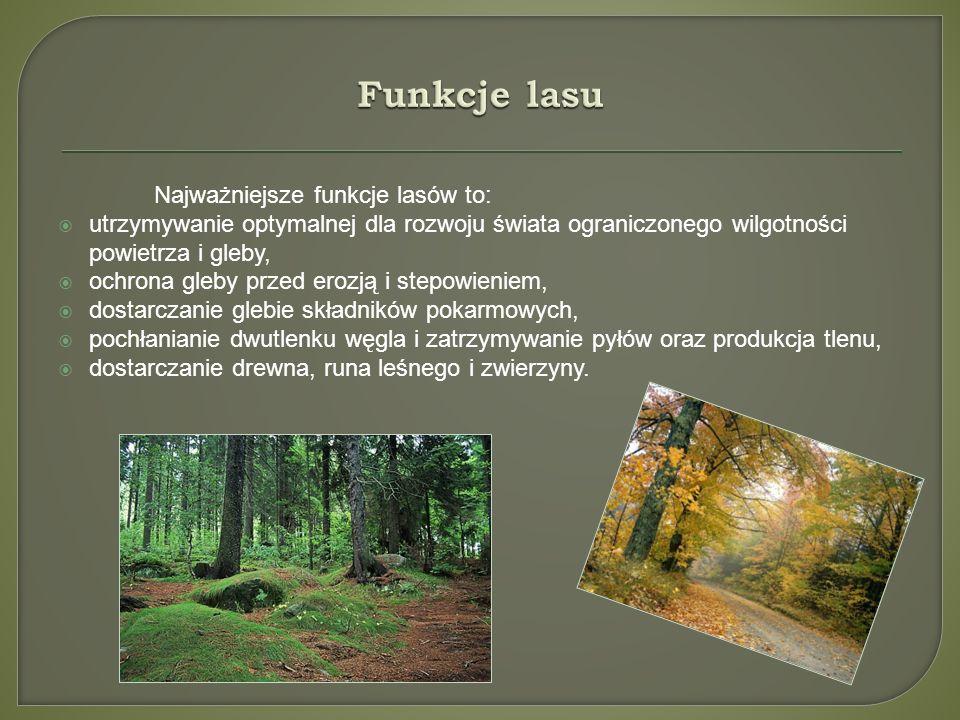 Najważniejsze funkcje lasów to: utrzymywanie optymalnej dla rozwoju świata ograniczonego wilgotności powietrza i gleby, ochrona gleby przed erozją i s