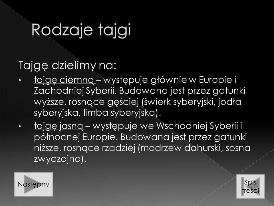 Tajgę dzielimy na: tajgę ciemną – występuje głównie w Europie i Zachodniej Syberii. Budowana jest przez gatunki wyższe, rosnące gęściej (świerk sybery
