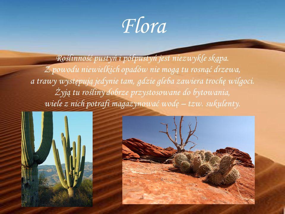 Flora Roślinność pustyń i półpustyń jest niezwykle skąpa. Z powodu niewielkich opadów nie mogą tu rosnąć drzewa, a trawy występują jedynie tam, gdzie