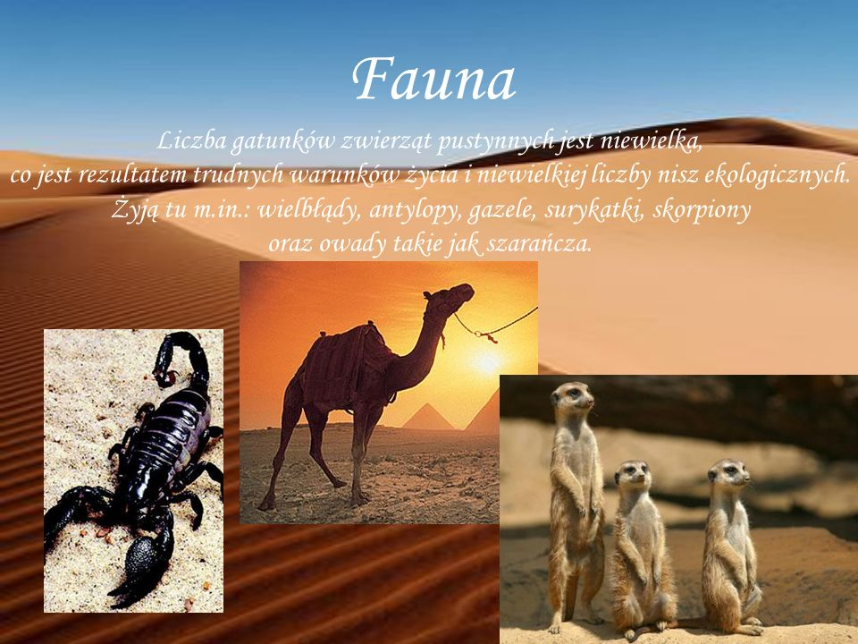 Fauna Liczba gatunków zwierząt pustynnych jest niewielka, co jest rezultatem trudnych warunków życia i niewielkiej liczby nisz ekologicznych. Żyją tu