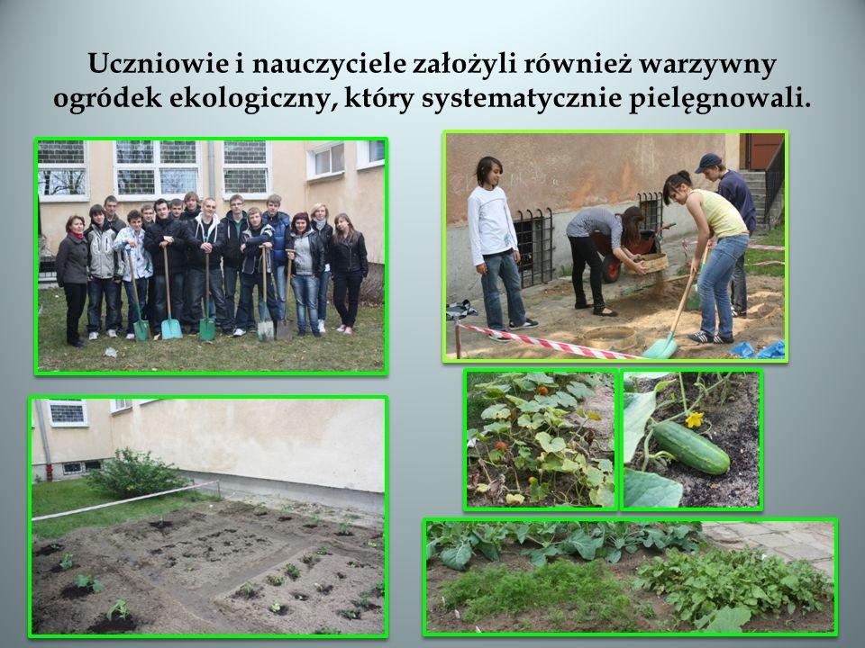 Uczniowie i nauczyciele założyli również warzywny ogródek ekologiczny, który systematycznie pielęgnowali.