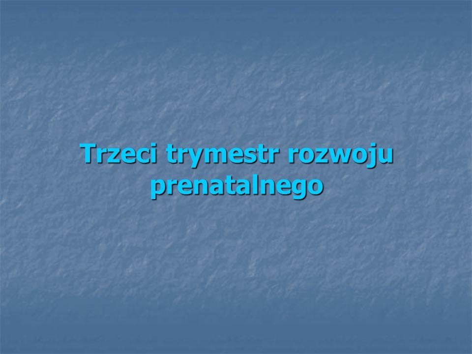 Trzeci trymestr rozwoju prenatalnego