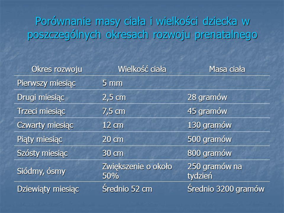 Porównanie masy ciała i wielkości dziecka w poszczególnych okresach rozwoju prenatalnego Okres rozwoju Wielkość ciała Masa ciała Pierwszy miesiąc 5 mm
