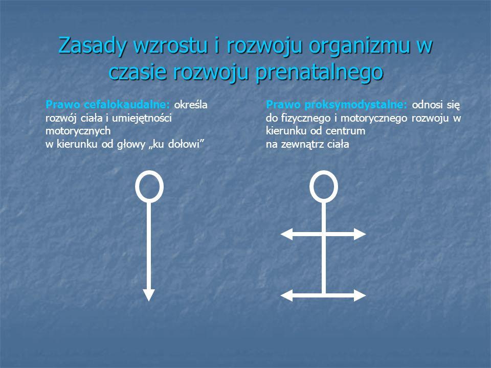Zasady wzrostu i rozwoju organizmu w czasie rozwoju prenatalnego Prawo cefalokaudalne: określa rozwój ciała i umiejętności motorycznych w kierunku od