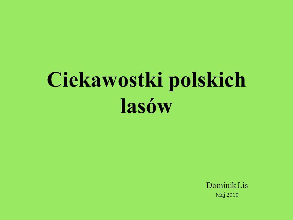 Ciekawostki polskich lasów Dominik Lis Maj 2010