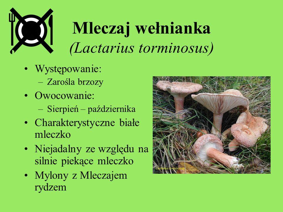 Mleczaj wełnianka (Lactarius torminosus) Występowanie: –Zarośla brzozy Owocowanie: –Sierpień – października Charakterystyczne białe mleczko Niejadalny