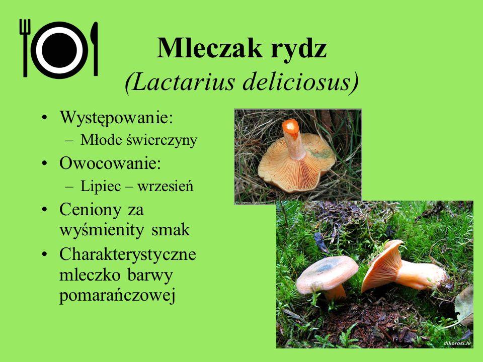 Mleczak rydz (Lactarius deliciosus) Występowanie: –Młode świerczyny Owocowanie: –Lipiec – wrzesień Ceniony za wyśmienity smak Charakterystyczne mleczk