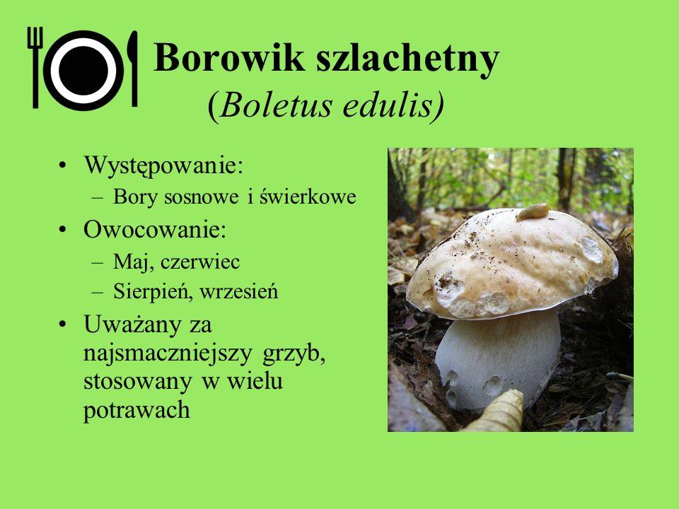 Borowik szlachetny (Boletus edulis) Występowanie: –Bory sosnowe i świerkowe Owocowanie: –Maj, czerwiec –Sierpień, wrzesień Uważany za najsmaczniejszy