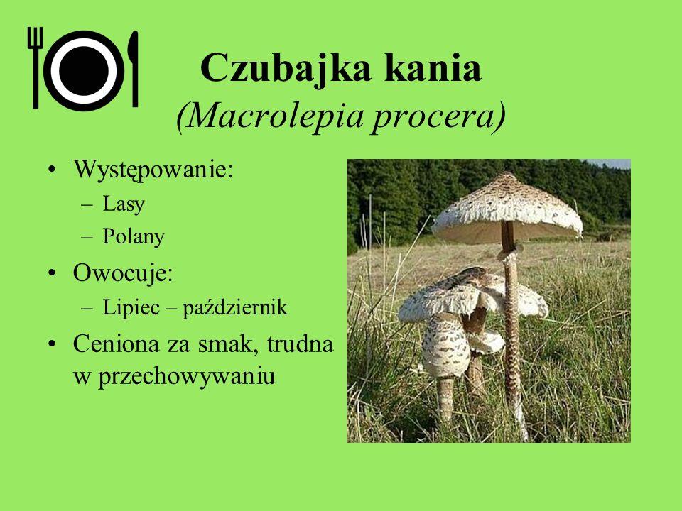 Występowanie: –Lasy –Polany Owocuje: –Lipiec – październik Ceniona za smak, trudna w przechowywaniu Czubajka kania (Macrolepia procera)