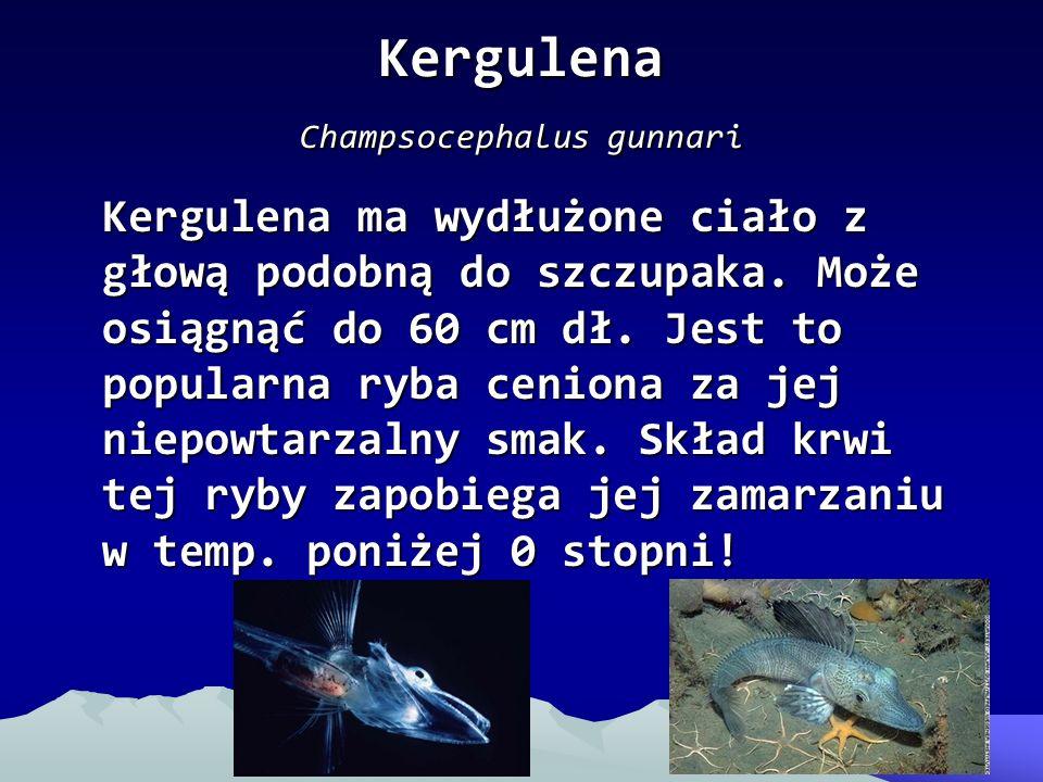Kergulena Champsocephalus gunnari Kergulena ma wydłużone ciało z głową podobną do szczupaka. Może osiągnąć do 60 cm dł. Jest to popularna ryba ceniona