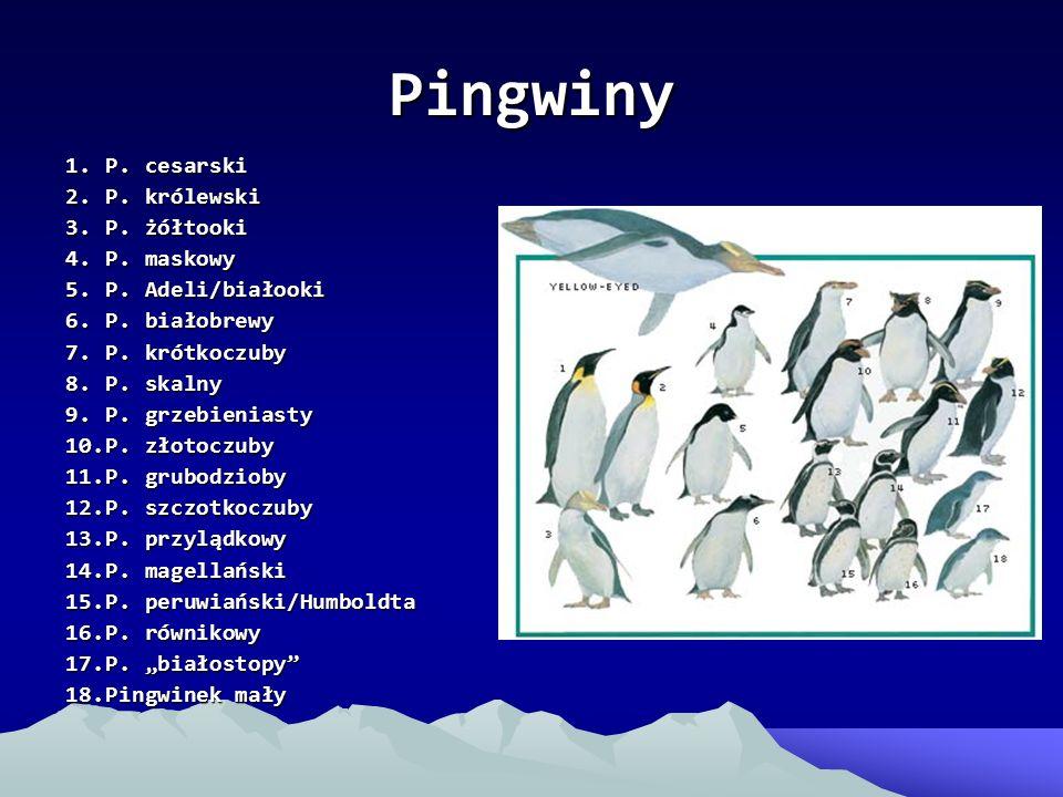 Pingwiny 1.P. cesarski 2.P. królewski 3.P. żółtooki 4.P. maskowy 5.P. Adeli/białooki 6.P. białobrewy 7.P. krótkoczuby 8.P. skalny 9.P. grzebieniasty 1