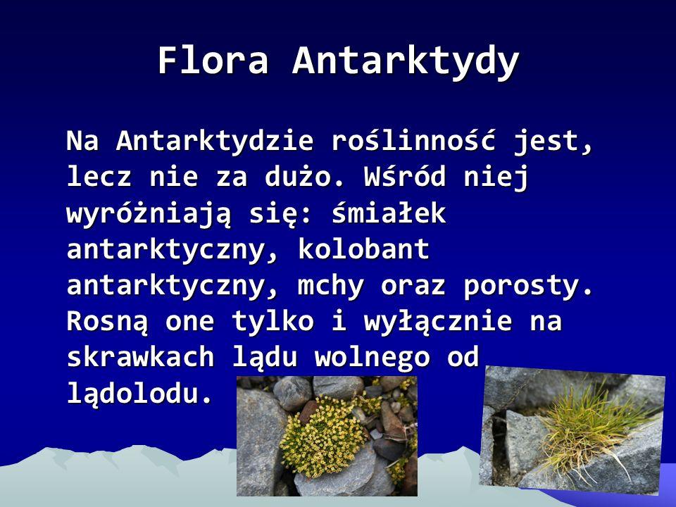 Flora Antarktydy Na Antarktydzie roślinność jest, lecz nie za dużo. Wśród niej wyróżniają się: śmiałek antarktyczny, kolobant antarktyczny, mchy oraz