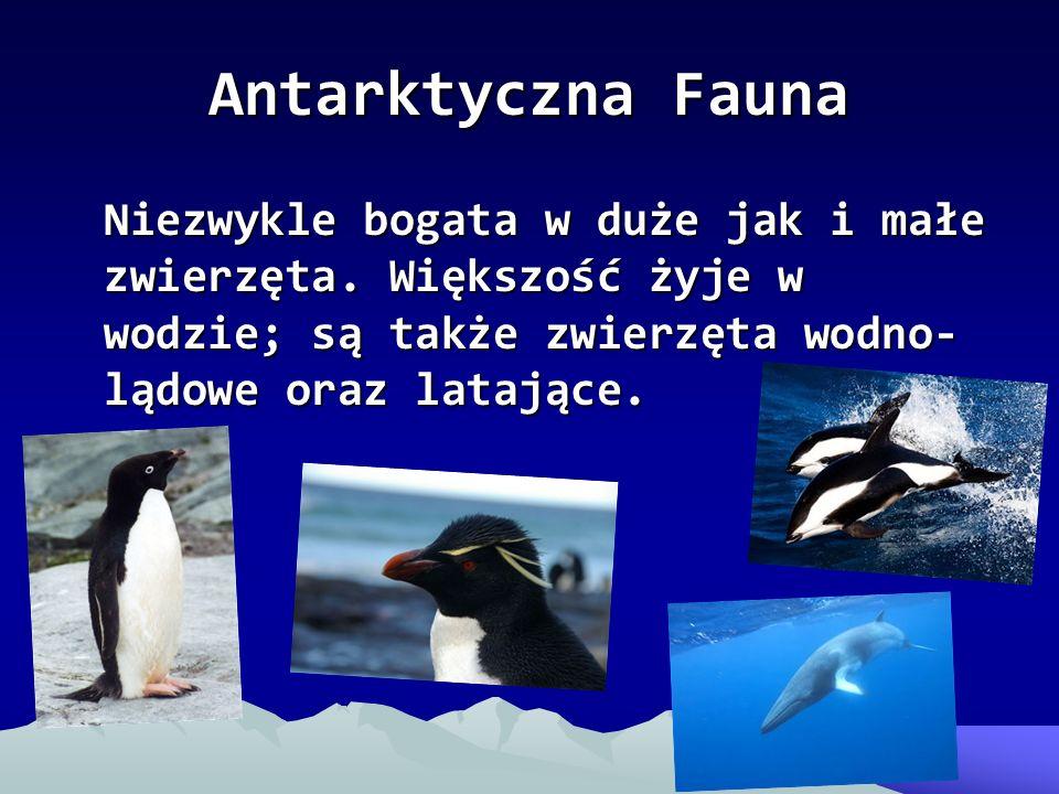 Antarktyczna Fauna Niezwykle bogata w duże jak i małe zwierzęta. Większość żyje w wodzie; są także zwierzęta wodno- lądowe oraz latające.