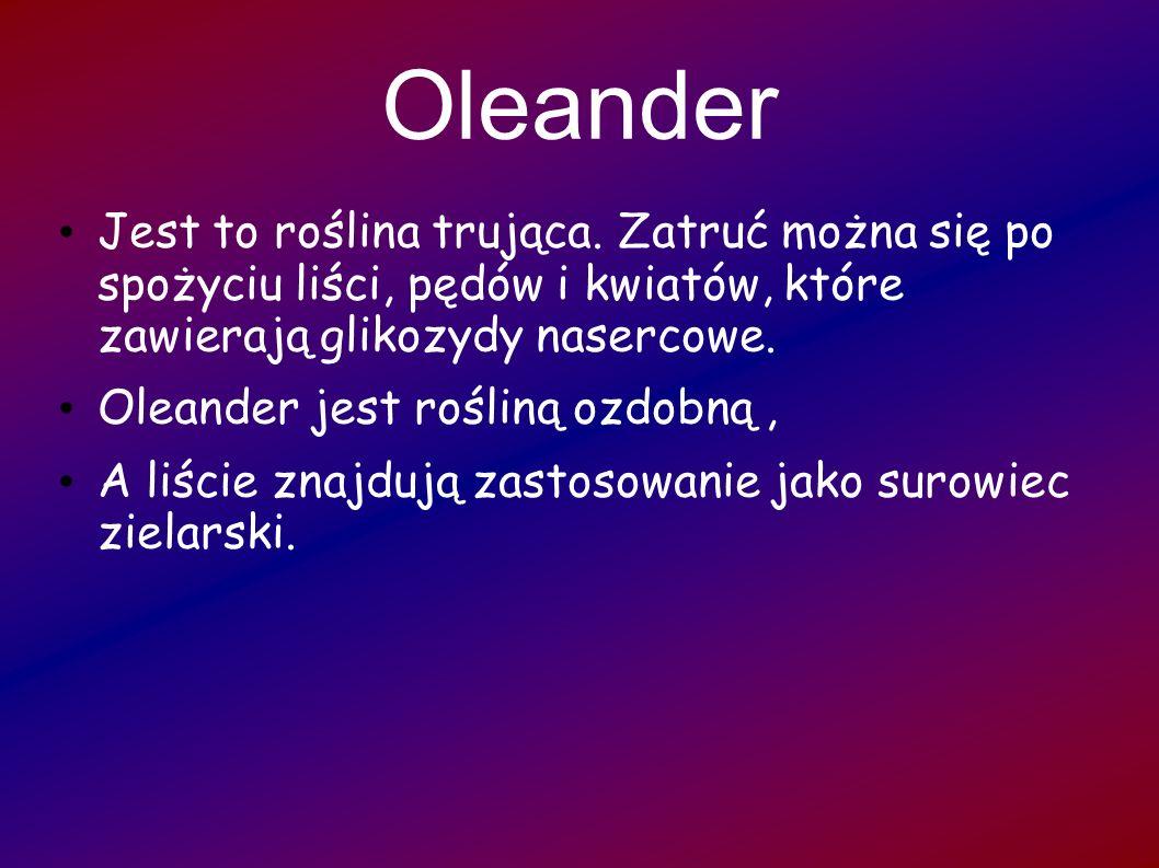 Oleander Jest to roślina trująca. Zatruć można się po spożyciu liści, pędów i kwiatów, które zawierają glikozydy nasercowe. Oleander jest rośliną ozdo