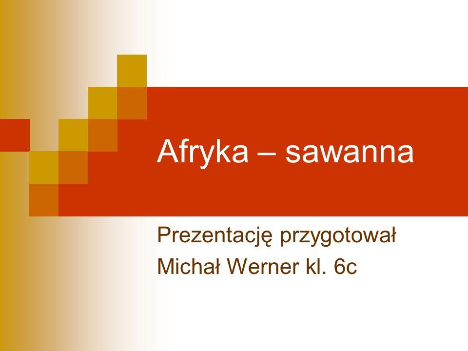 Afryka – sawanna Prezentację przygotował Michał Werner kl. 6c
