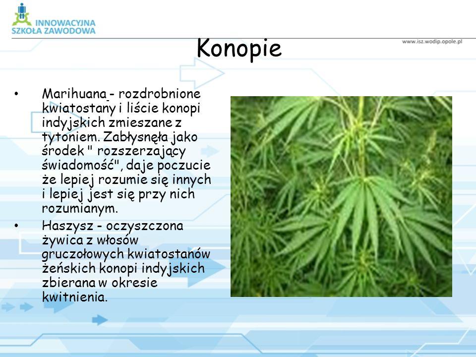 Konopie Marihuana - rozdrobnione kwiatostany i liście konopi indyjskich zmieszane z tytoniem.